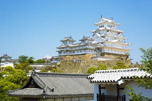 新緑の姫路城の写真素材 [FYI00569342]