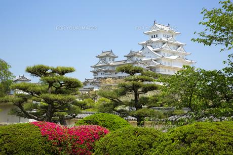 新緑の姫路城の写真素材 [FYI00569343]
