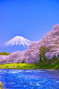 富士市 桜咲く潤井川から見た富士山の写真素材 [FYI00569388]