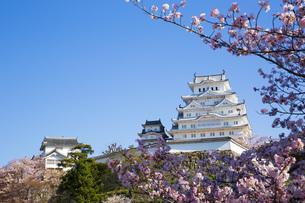 桜と姫路城の写真素材 [FYI00571551]