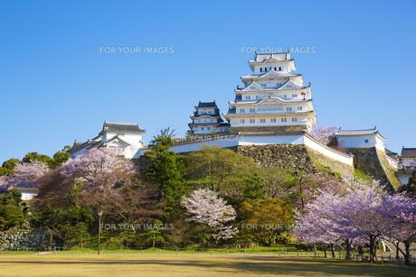 桜と姫路城の写真素材 [FYI00571552]