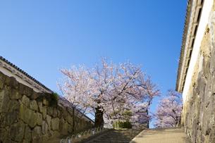 姫路城と桜の写真素材 [FYI00571554]