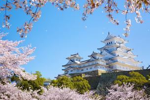 桜吹雪と姫路城の写真素材 [FYI00571569]