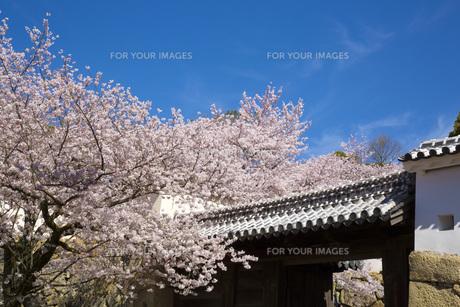 いの門と姫路城の春の写真素材 [FYI00571571]