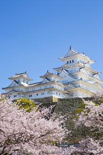 桜と姫路城の写真素材 [FYI00571575]
