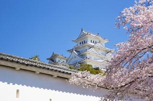桜と姫路城の写真素材 [FYI00571576]