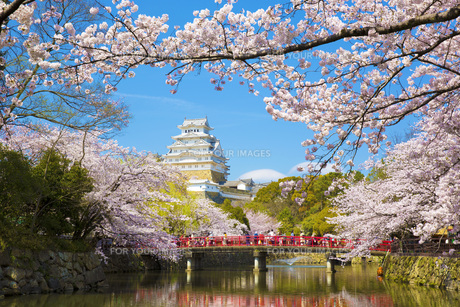 桜と姫路城の写真素材 [FYI00571582]