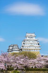 桜と姫路城の写真素材 [FYI00571583]