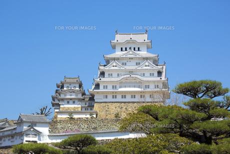 新緑の松と姫路城の写真素材 [FYI00571585]