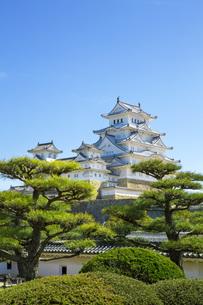新緑の松と姫路城の写真素材 [FYI00571587]