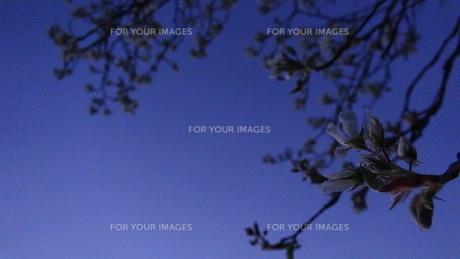 藍色に沈みゆく世界の写真素材 [FYI00571855]