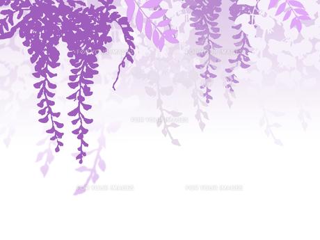 藤 ふじ 藤の花 Fyi00571872 ロイヤリティフリーイラスト素材 写真