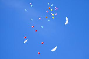 舞い上がる風船の写真素材 [FYI00571923]