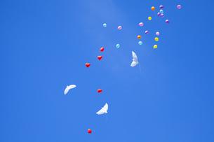 舞い上がる風船の写真素材 [FYI00571928]