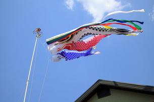 屋根より高い鯉のぼりの写真素材 [FYI00572059]
