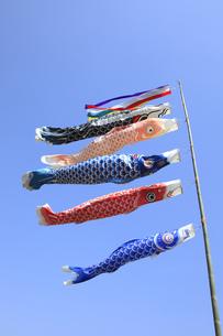 鯉のぼりの写真素材 [FYI00572060]