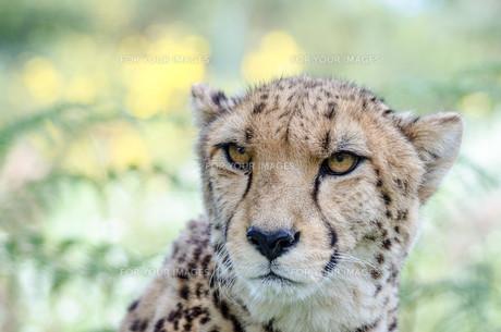 animalの写真素材 [FYI00572874]