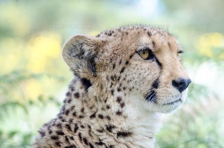 animalの写真素材 [FYI00572878]