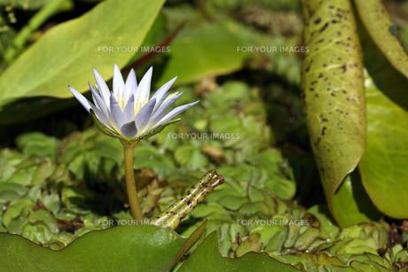 flowerの素材 [FYI00573899]
