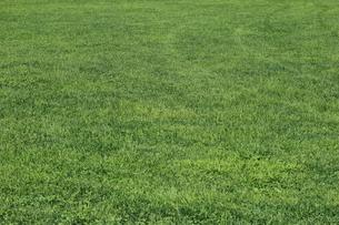 全面芝生|背景素材の写真素材 [FYI00574085]