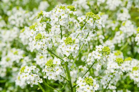 bloomの素材 [FYI00579715]