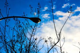 木の実と街灯と空の写真素材 [FYI00580391]