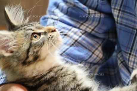 抱きかかえられる猫の写真素材 [FYI00580432]
