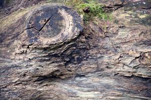 ビンテージ風の流木|素材写真の写真素材 [FYI00580489]