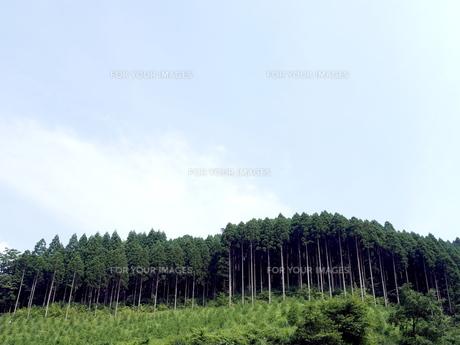 杉山の写真素材 [FYI00580570]
