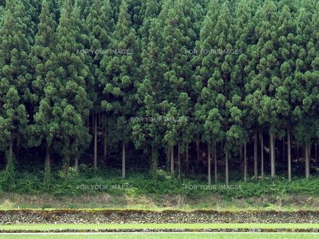 杉山の写真素材 [FYI00580572]