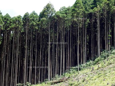 杉山の写真素材 [FYI00580582]