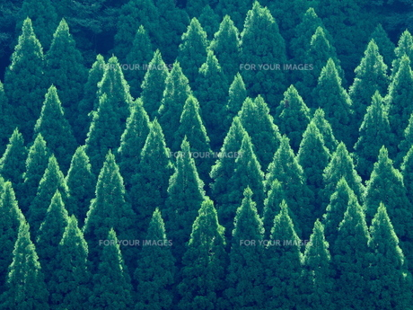 杉山の写真素材 [FYI00580587]
