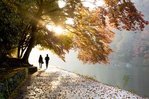 秋の嵐山を散歩する二人の写真素材 [FYI00582834]