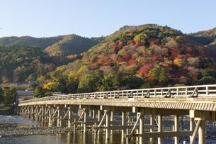 秋の京都嵐山の写真素材 [FYI00582856]