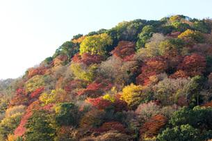 秋の京都嵐山の写真素材 [FYI00582857]