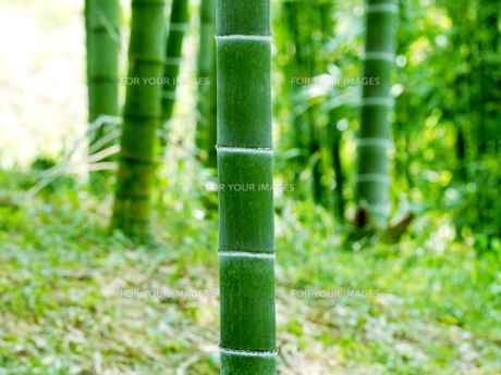山里の竹林の写真素材 [FYI00582928]