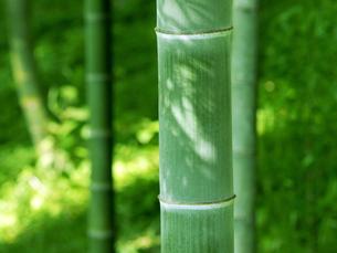 山里の竹林の写真素材 [FYI00582929]