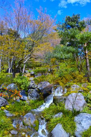 日本庭園の滝の写真素材 [FYI00585172]