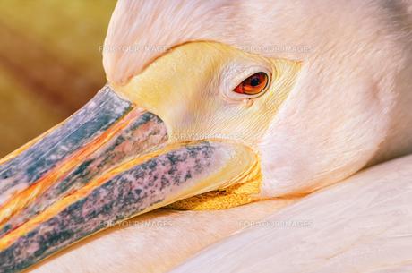 birdの写真素材 [FYI00589942]
