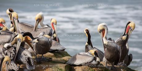 birdの写真素材 [FYI00593181]