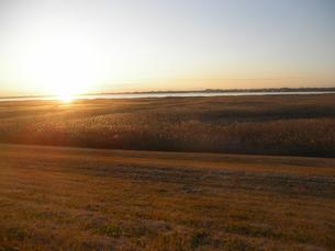 冬の葦原に沈む夕日_渡良瀬遊水地の写真素材 [FYI00593912]
