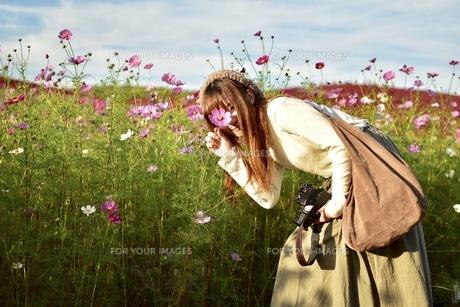 コスモス畑と女の子の写真素材 [FYI00593972]
