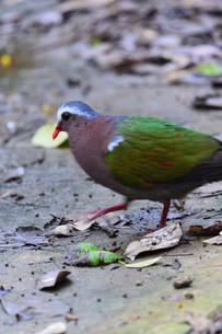 宮古島/野鳥の写真素材 [FYI00596001]