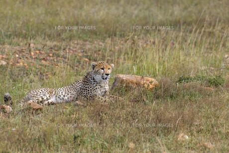 kenyaの写真素材 [FYI00596328]