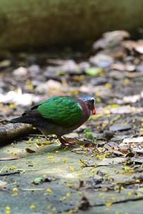 宮古島/野鳥の写真素材 [FYI00598224]