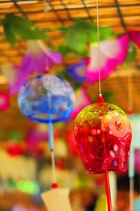 西新井大師風鈴祭りの風景の写真素材 [FYI00598311]
