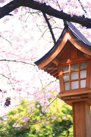 桜と神社の写真素材 [FYI00598413]