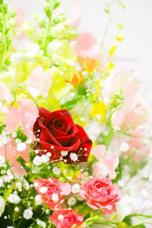 花束の写真素材 [FYI00598458]