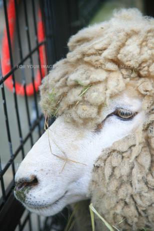 動物園の写真素材 [FYI00598477]