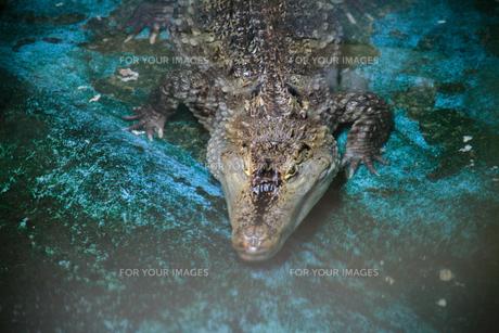 動物園の写真素材 [FYI00598481]